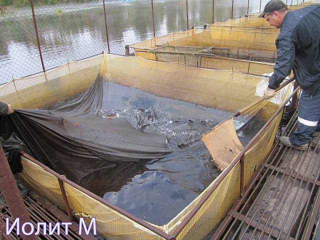 Рыба в садках для разведения