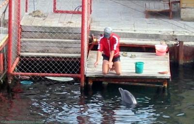 Вольеры для морских животных